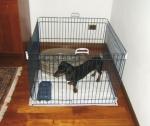 Ferplast DOG TRAINING Загон для щенков, 80*80*62 см., 4 секции.