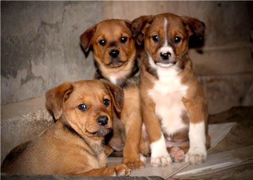 нежелательная беременность собаки и как следствие бездомные щенки