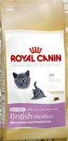 корм для котят британской породы